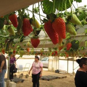 Выставка достижений израильских фермеров