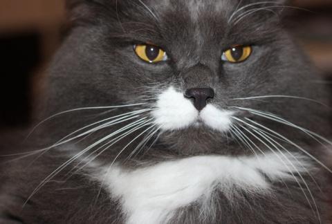Как кошки манипулируют и управляют людьми, а паразиты управляют миром