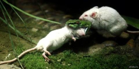 Животные с которых людям нужно брать пример.