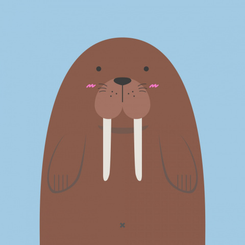 Поймали чукчи огромного моржа итащат домой. Мимо идёт геолог…