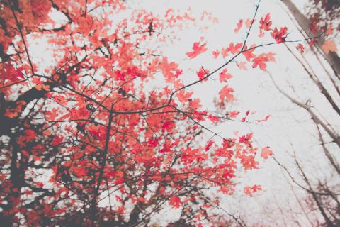 5 лучших композиций про осень