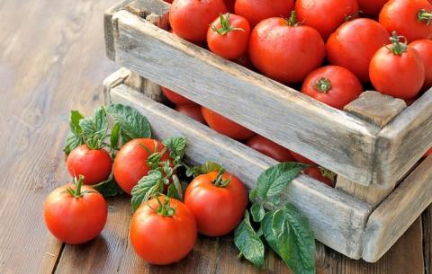 В этом году я заработал свой первый миллион на помидорах!