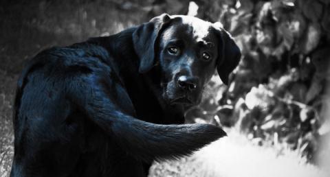 Истории об аномальных собака…