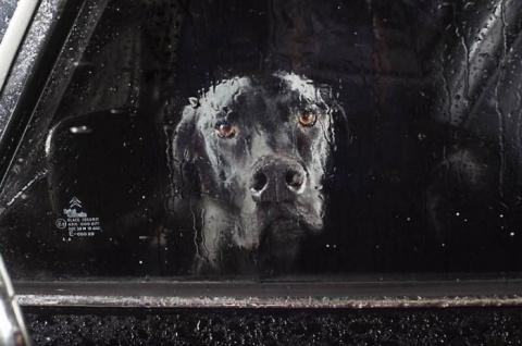 Собаки в ожидании хозяина (11 фото)