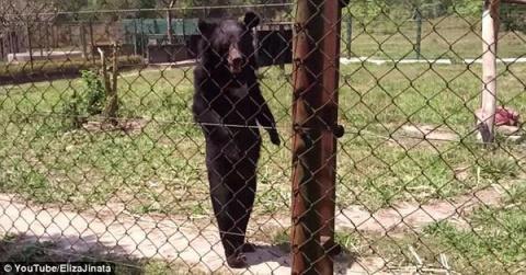 Медведь, который сломался и …