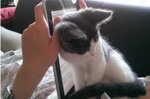 15 котов, которые и не подоз…