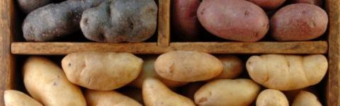 Самые вкусные сорта картофел…
