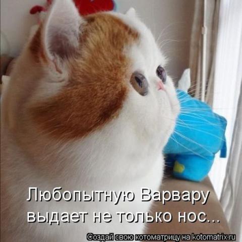 КОТОУЛЕТ 1