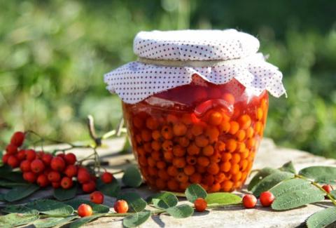 Вкусные и целебные рецепты заготовок из красной рябины