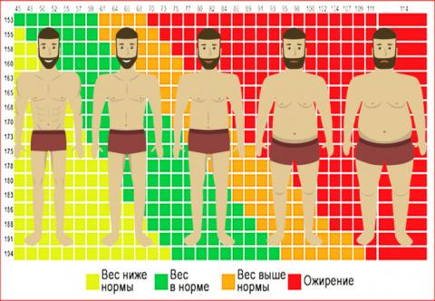 Что такое индекс массы тела …