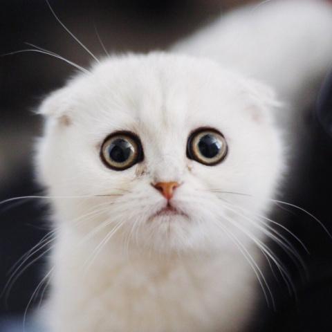 """Котенок """"простите-извините"""""""