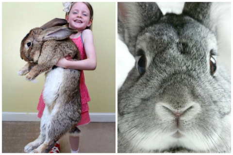 Кролики - это не только ценный мех