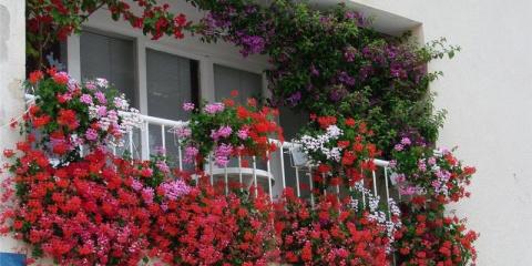Горшечные растения для балкона и террасы, подхватывающие цветение друг друга