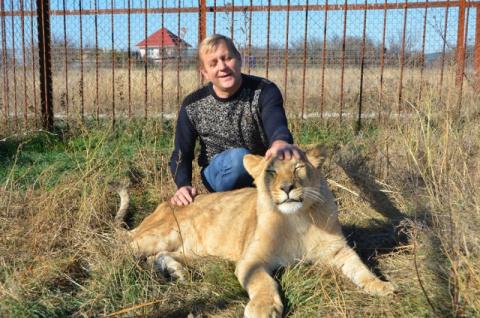 У спасенной львицы Лолы в Крыму появилась семья