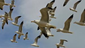 Почему птицы не сталкиваются…