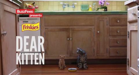 Рекламный ролик с котиками стал новым хитом YouTube