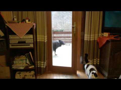 Пес увидел кота за дверью и …