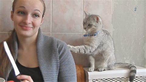 Приколы про котов и кошек  К…