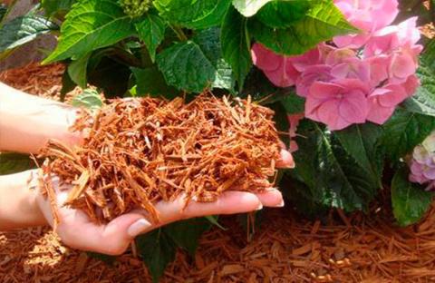 Шесть способов борьбы с сорняками по-умному