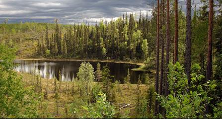 В реках Карелии будут восстанавливать популяцию двустворчатых моллюсков