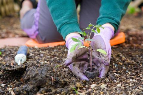 Что можно посеять и посадить…