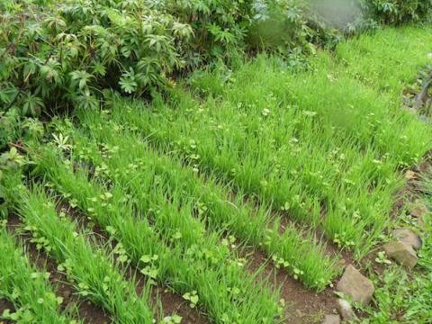 Поможет почве, без сомнения, зеленое удобрение