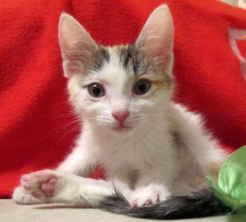 Новосибирец, спасший на оживленной трассе котенка: Это оказалась девочка, назвали Анфисой...