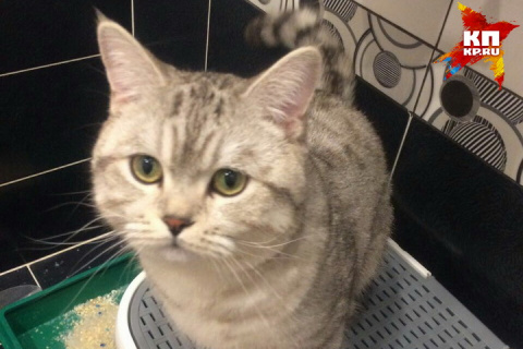 Сибирячка, купившая кота-экстрасенса за 5 миллионов: Боюсь очередей к дому и выбитых окон!