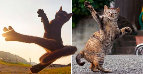 Кошки-ниндзя покорили пользователей сети