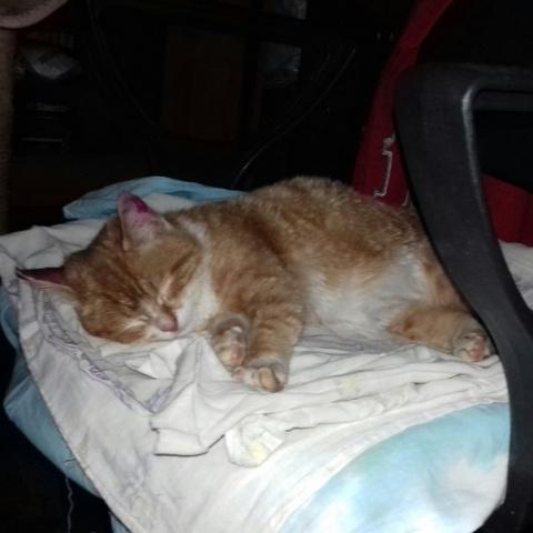 Сегодня (29.03.2017) брат нашел котенка в подъезде. С ошейником. Мы оставили себе....