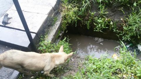 Её щенков затопило дождём, и…