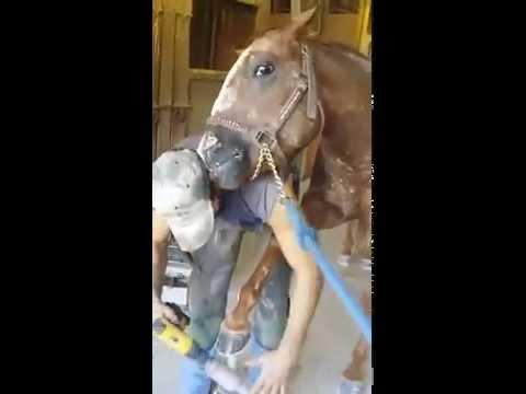 Парень начал подпиливать кон…