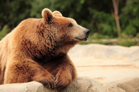 Только политика. Козёл и медвежонок 6