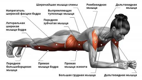 """Усложненные варианты упражнения """"планка"""""""
