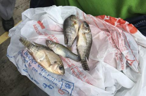 В мексиканском городке прошел дождь из рыб