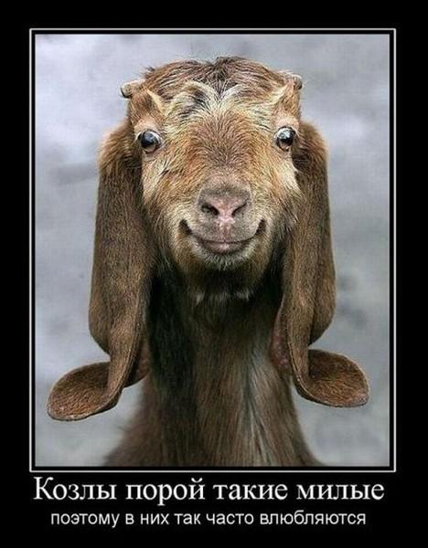 козел очаровашка