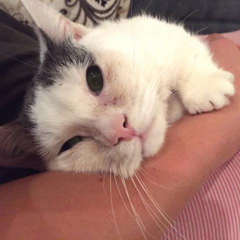 Слепого котенка никто не хотел забирать из приюта, но произошло чудо!