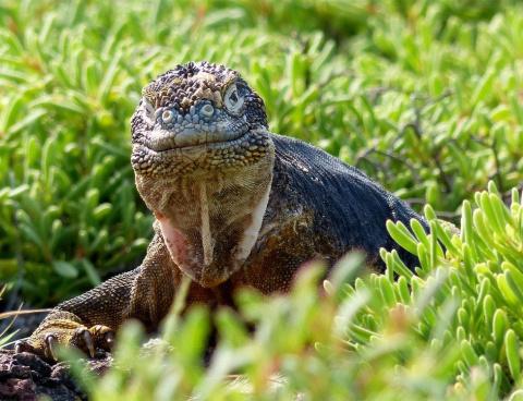 Победители конкурса фотографий, сделанных на Галапагосских островах