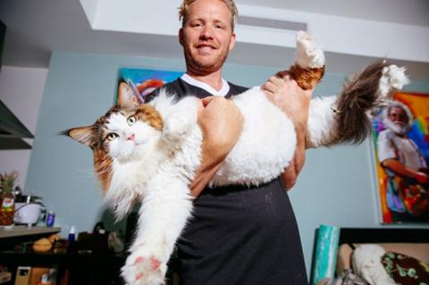 """Любимого кота должно быть много — 10 забавных питомцев размера """"плюс"""""""