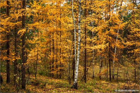 Общение с осенним лесом
