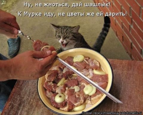 Новые котоматрицы))