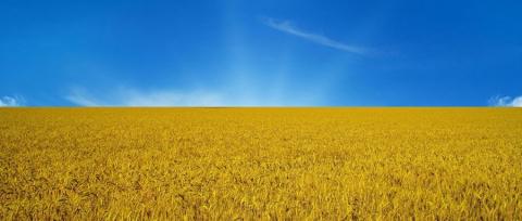 Украина загнана в петлю. Катастрофа неизбежна