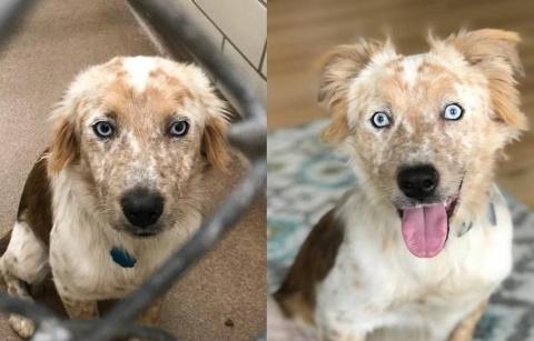 Девушка забрала пса из приюта, и теперь его счастью нет предела