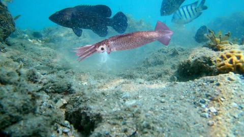 Рыба атакует КАЛЬМАРА!!! Под…