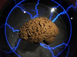 Выяснено происхождение мозго…