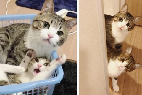 Два дружных кота, спасенных …