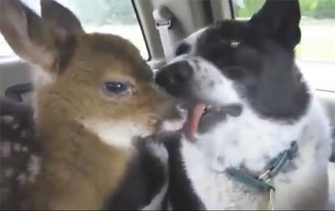 Пес, который запугиваем медв…