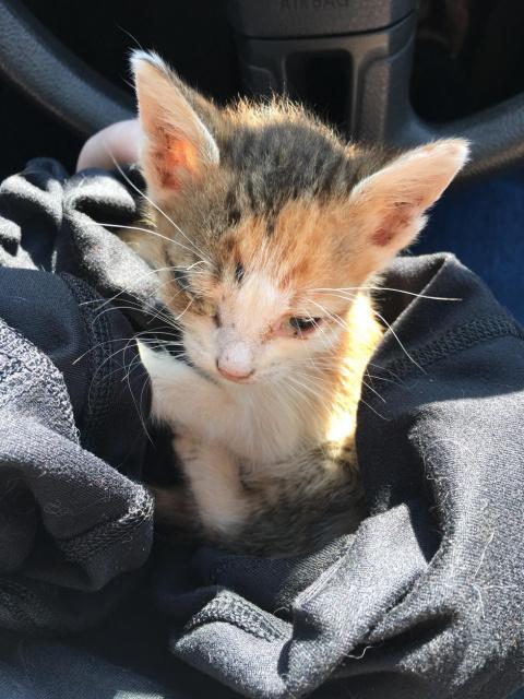 Ветеринар давал лишь 50% на то, что котенок переживет выходные...