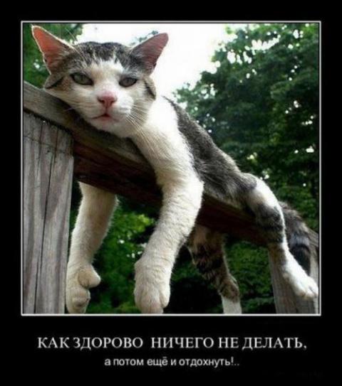 Котомашка...