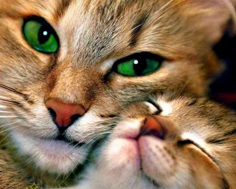 Помнят ли кошки своих котят?. Пес, который участвовал в чемпионате мира